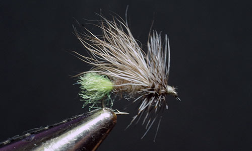 Tweeter caddis