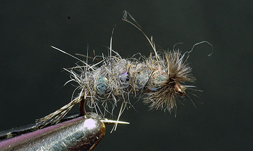 Wiese's Gray Glass Caddis