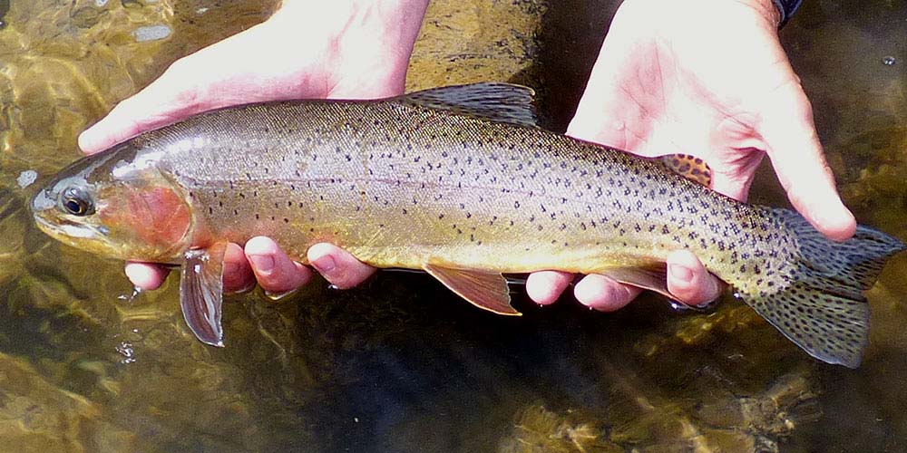 Afternoon combo trip cutthroat.